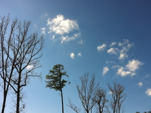 sky and trees_wal_022713