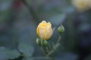 flower_onlyoublog